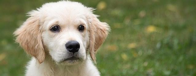 フリー素材犬10 (2).jpg